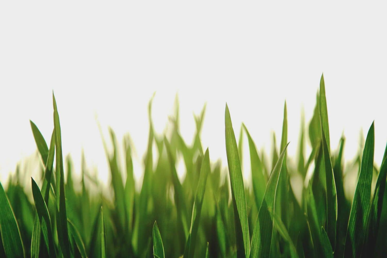 grass, turf